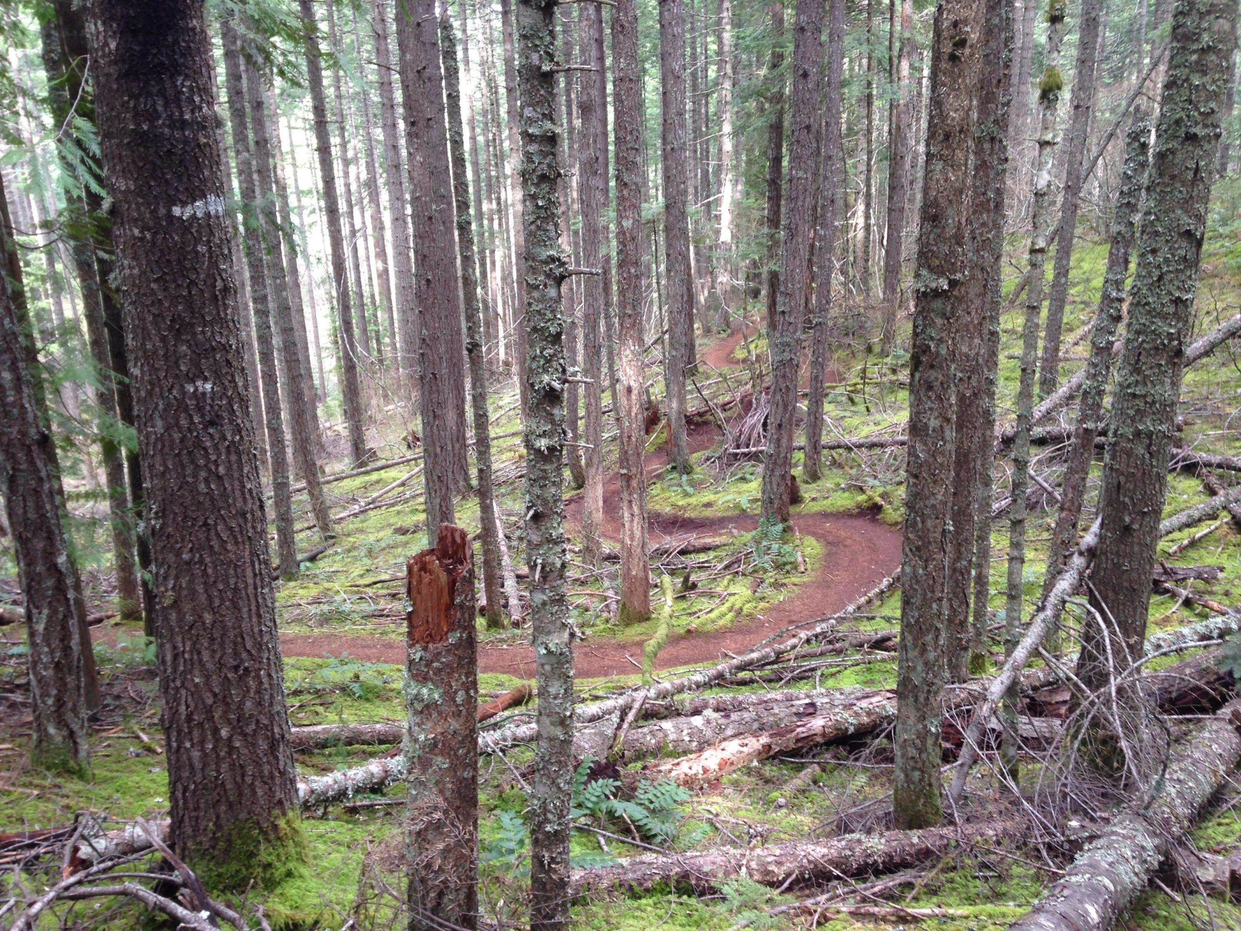 Hood River County in Oregon Re-opens Trails to the Public Following Coronavirus Shutdown - Singletracks Mountain Bike News